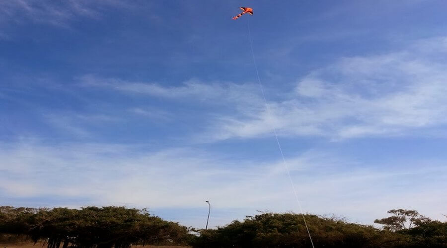 Flying Kites at the Beach