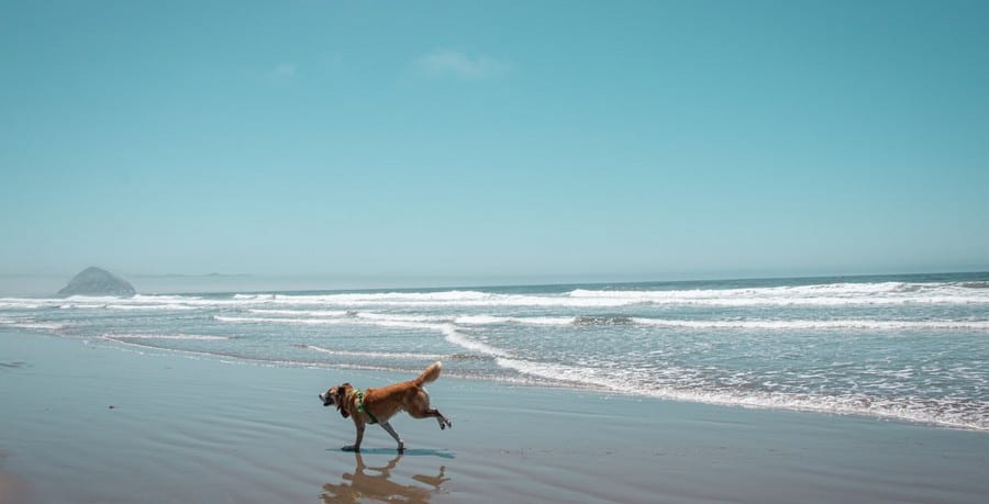 beaches for pets