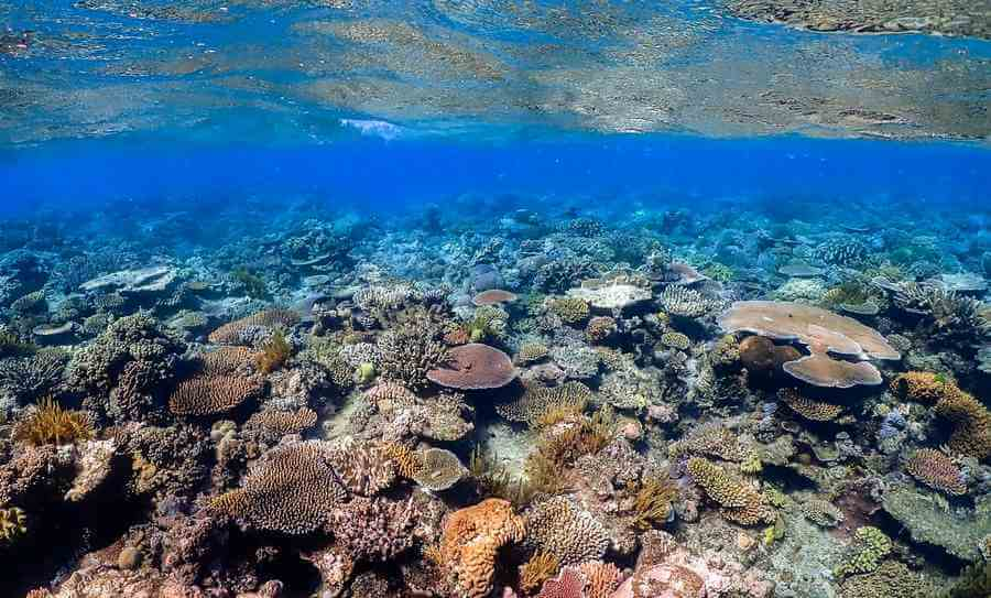 Test Your Knowledge Of The Great Barrier Reef