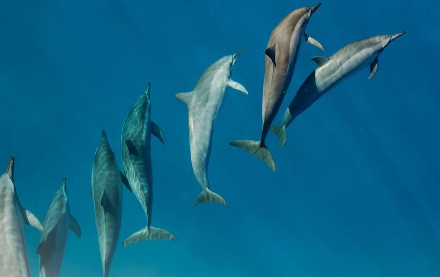 Can Dolphins Kill Sharks